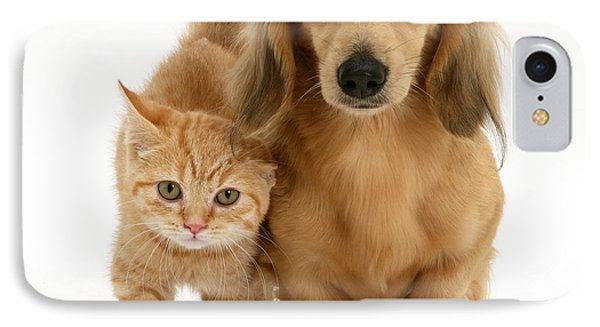 Kitten And Puppy Phone Case by Jane Burton