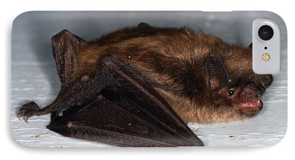 Little Brown Bat Phone Case by Ted Kinsman