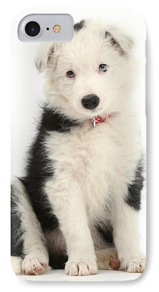 Border Collie Puppy Phone Case by Mark Taylor