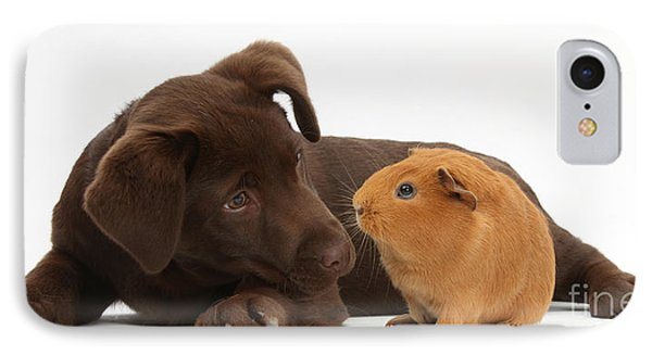 Puppy And Guinea Pig IPhone Case by Mark Taylor