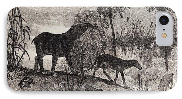 1837 Extinct Prehistoric Animals Paris Phone Case by Paul D Stewart