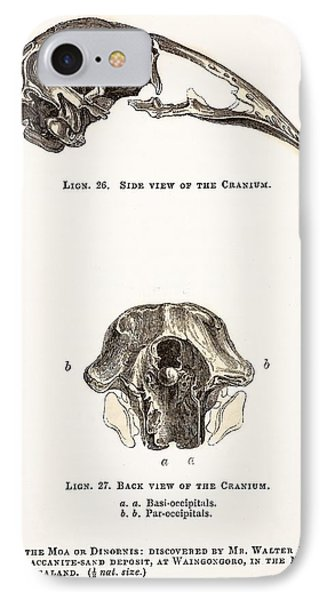 1851 Dinornis Moa Skull Discovery Phone Case by Paul D Stewart