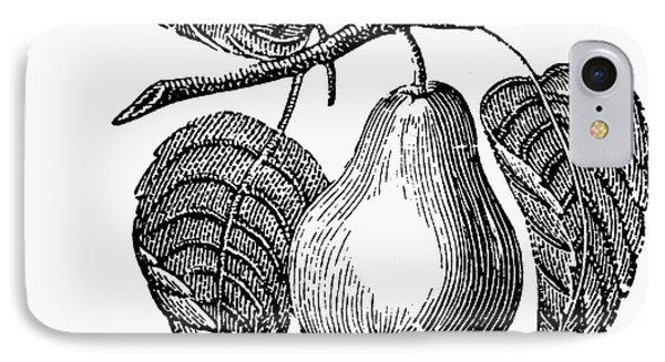 Botany: Pear Phone Case by Granger