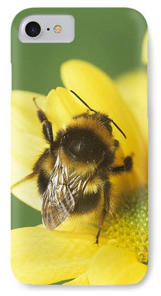 Bumble Bee Pollinating A Flower Phone Case by David Aubrey