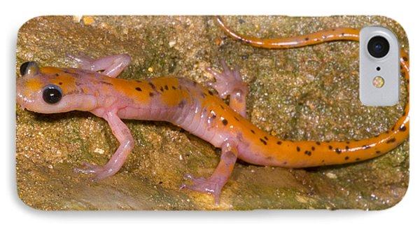 Cave Salamander Phone Case by Dante Fenolio