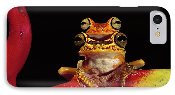 Chachi Tree Frog Hyla Picturata Pair Phone Case by Pete Oxford