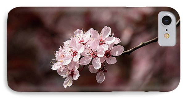 Cherry Blossom Tree Phone Case by Pierre Leclerc Photography