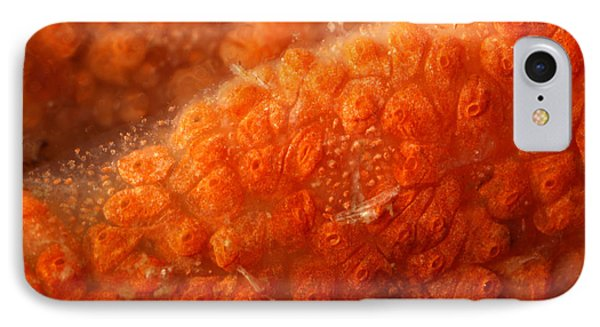 Close-up Of Live Sponge Phone Case by Ted Kinsman