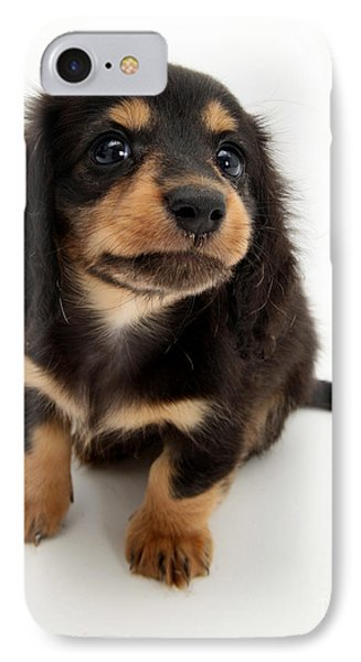 Dachshund Pup IPhone Case