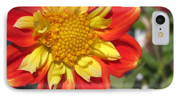 Dahlia Named Pooh IPhone Case by J McCombie