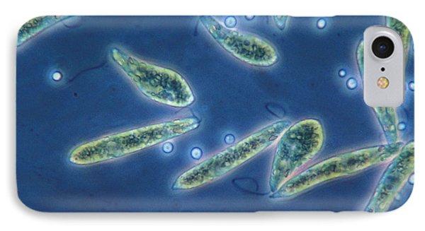 Euglena Gracilis, Lm IPhone Case by Eric V. Grave