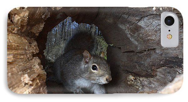Gray Squirrel Phone Case by Ted Kinsman