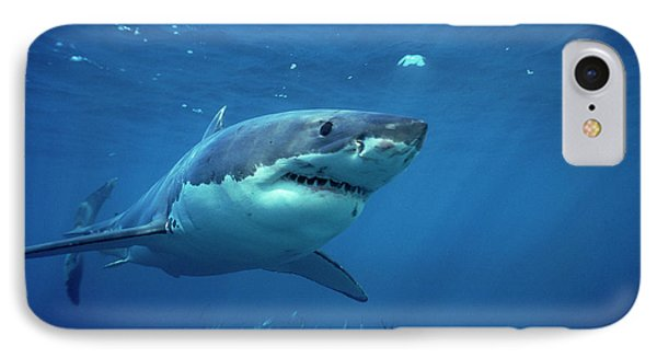 Great White Shark Carcharodon Phone Case by Mike Parry