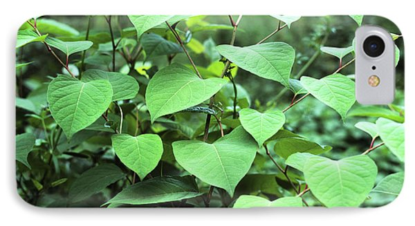 Japanese Knotweed Phone Case by Sheila Terry