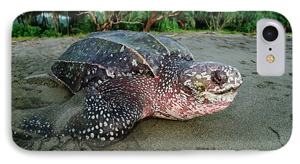Leatherback Sea Turtle Dermochelys Phone Case by Mike Parry