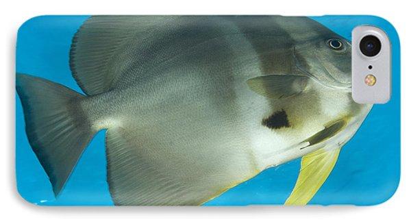 Longfin Spadefish, Papua New Guinea Phone Case by Steve Jones