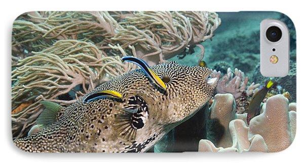 Map Pufferfish Phone Case by Georgette Douwma