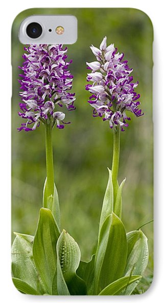 Monkey Orchid (orchis Simia) Phone Case by Bob Gibbons