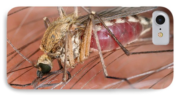 Mosquito Biting A Human Phone Case by Ted Kinsman