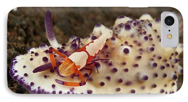 Nudibranch With Orange Emperor Shrimp Phone Case by Mathieu Meur