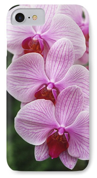 Orchid Flowers IPhone Case by Duncan Smith