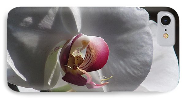 Orchid Macro IPhone Case by Alfred Ng