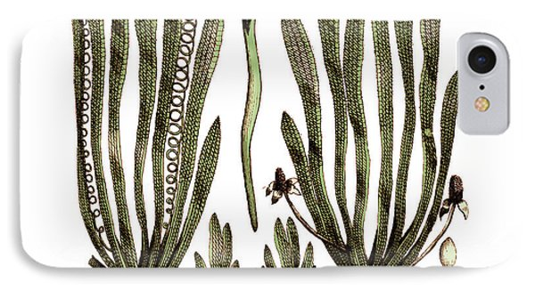 Page From Darwins Botanic Garden IPhone Case by Science Source
