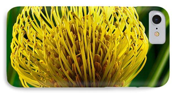 Picture Of A Pincushion Protea IPhone Case by Perla Copernik