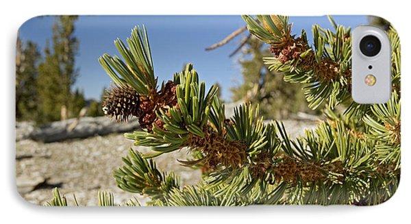 Pinus Longaeva Phone Case by Bob Gibbons