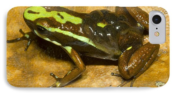 Poison Frog With Eggs Phone Case by Dante Fenolio
