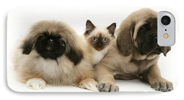Puppies And Kitten IPhone Case by Jane Burton