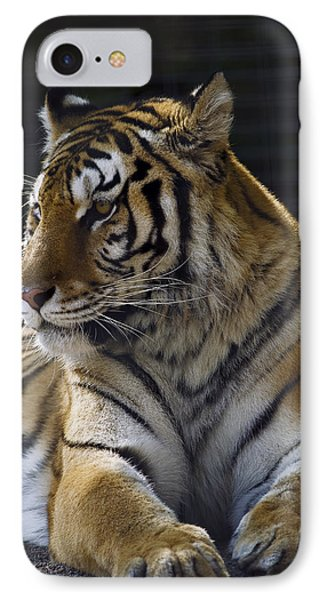 Siberian Tiger IPhone Case by JT Lewis