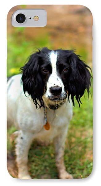 Spaniel IPhone Case by Marlo Horne