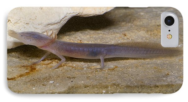 Texas Blind Salamander Phone Case by Dante Fenolio