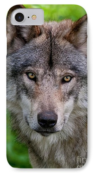Timber Wolf Portrait Phone Case by Michael Cummings