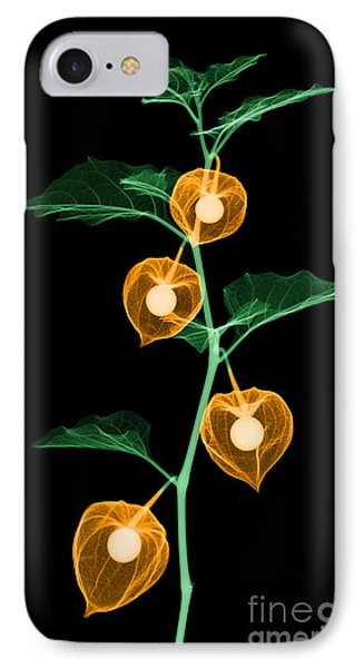 X-ray Of Chinese Lantern Plant Phone Case by Ted Kinsman