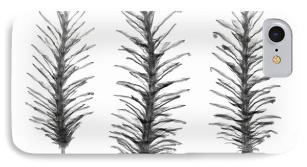 X-ray Of Pine Cones Phone Case by Ted Kinsman