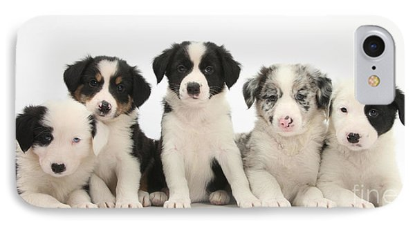 Border Collie Puppies IPhone Case by Mark Taylor