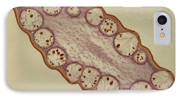 Fucus Sp. Algae, Lm Phone Case by M. I. Walker