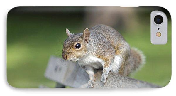 Grey Squirrel Phone Case by Georgette Douwma