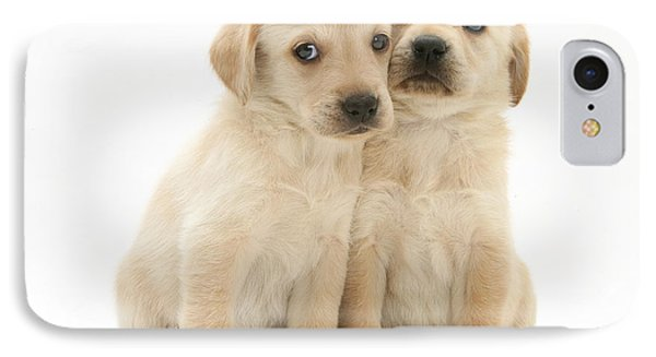 Labrador Retriever Puppies IPhone Case by Jane Burton