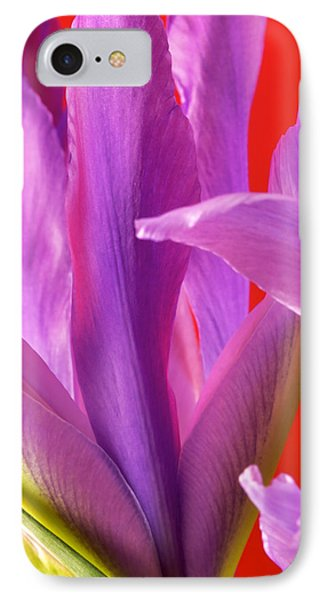 Photograph Of A Dutch Iris IPhone Case by Perla Copernik