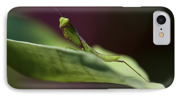 Praying Mantis IPhone Case by Zoe Ferrie