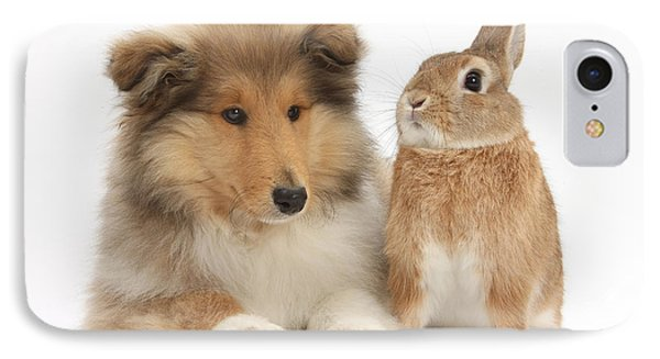 Rough Collie Pup With Rabbit Phone Case by Mark Taylor