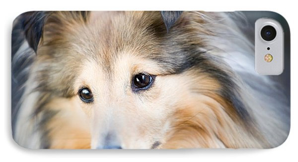 Sheltie IPhone Case by Kati Molin