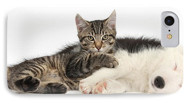 Tabby Kitten & Border Collie Phone Case by Mark Taylor