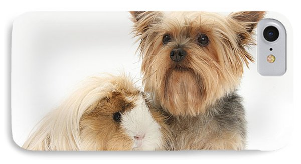 Yorkshire Terrier And Guinea Pig Phone Case by Mark Taylor