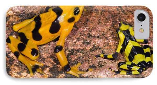Harlequin Toad Phone Case by Dante Fenolio