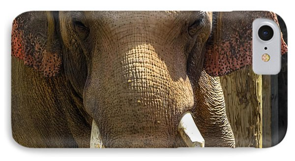 IPhone Case featuring the photograph Asian Elephant by Brian Stevens