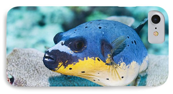 Blackspotted Puffer Phone Case by Georgette Douwma